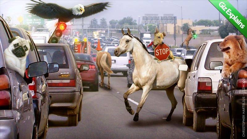 Illustration for article titled Giz Explains: Traffic