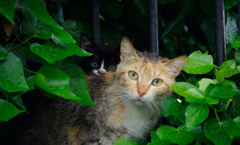 Feral cat care portesham