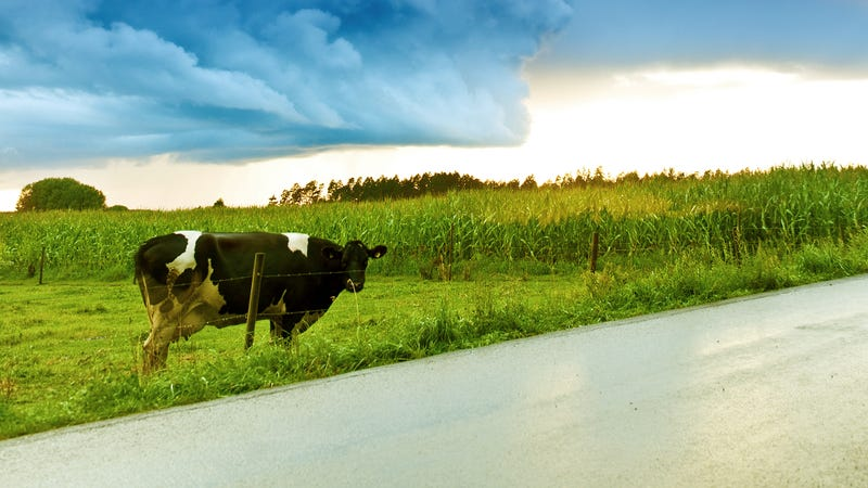 Illustration for article titled Child Pointing Out Cow On Side Of Road Must Think Parents Don't Have Fucking Eyes