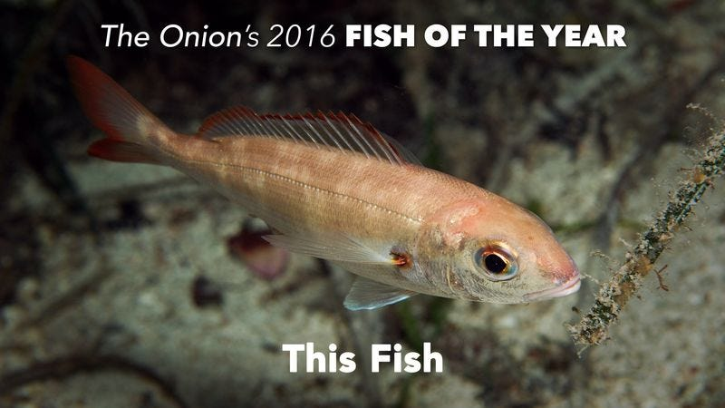 In a tumultuous year defined by strife and division, this fish remained a steady and reassuring presence.