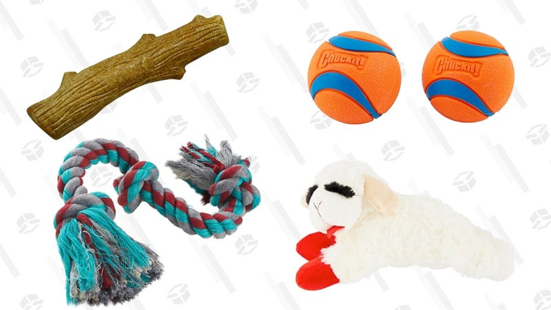 20% Off Toys | Chewy