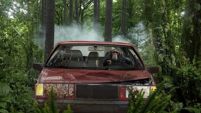 Illustration for article titled The Power Of Nature: A Chimp In A Volvo Has Been Running Over Researchers In The Congo Rainforest For Decades