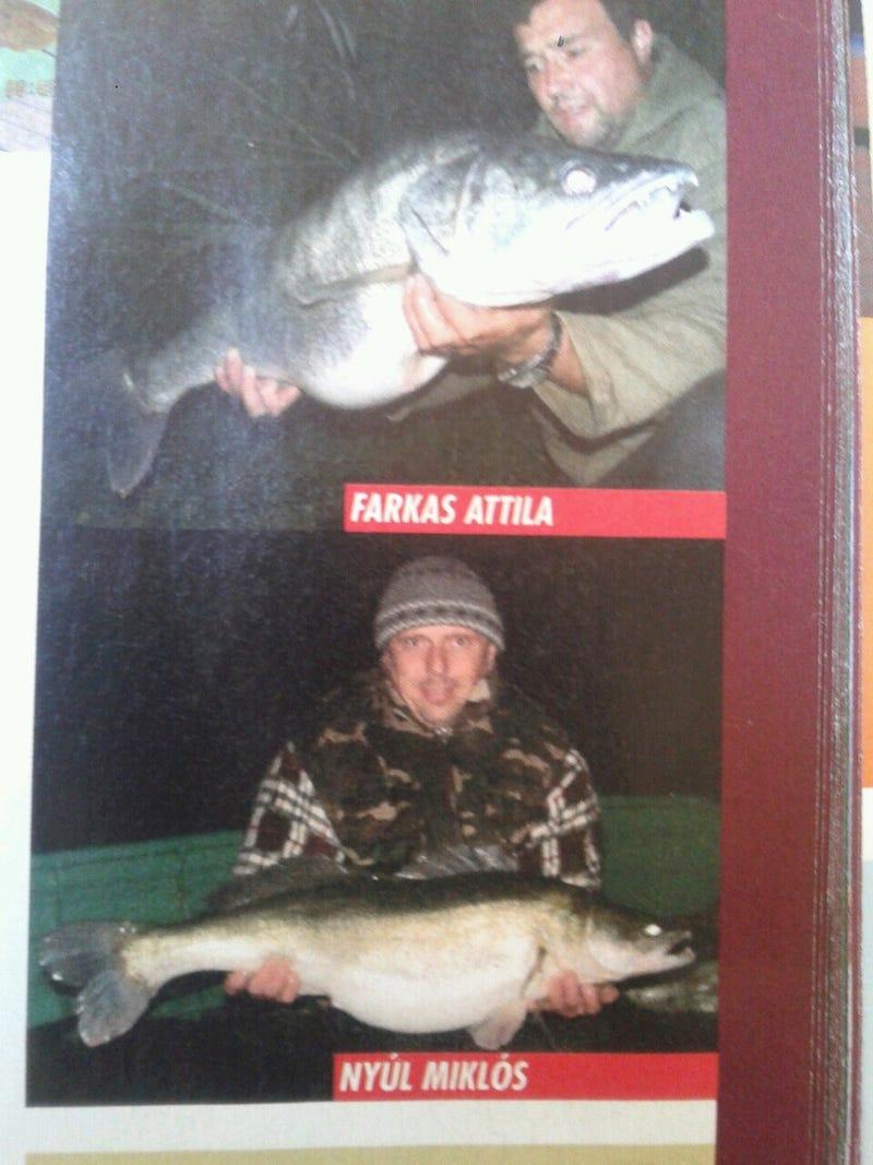 Illustration for article titled Ezentúl a túl nagy halat is vissza kell dobni