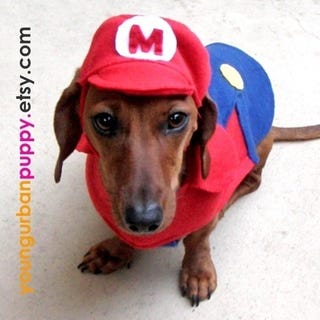 Illustration for article titled Finally, Dogs Can Cosplay As Mario, Too