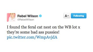 Illustration for article titled Rebel Wilson Throws Down With Some Mean Feral Cats