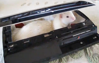 Illustration for article titled The PS3 Can Be Used As A Bed For Your Pet