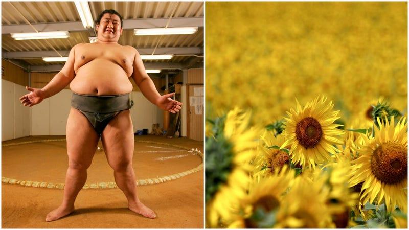 Illustration for article titled Big happy men smile amidst big happy flowers