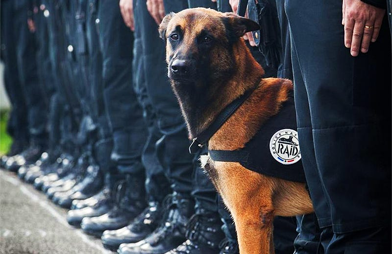 Illustration for article titled Beloved French Police Dog Killed, Five Officers Injured During Paris Anti-Terror Raid