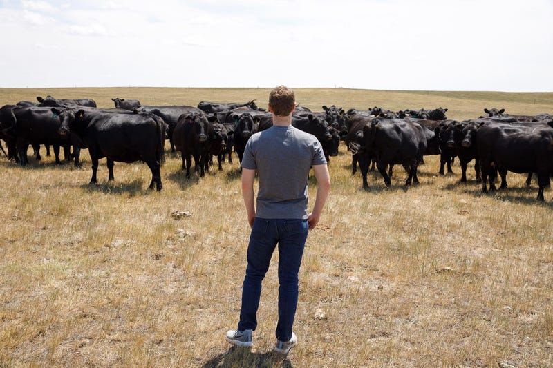 Illustration for article titled Mark Zuckerberg Looking at Cattle That He Probably Wants to Slaughter, Butcher, and Eat With a Side of Asparagus