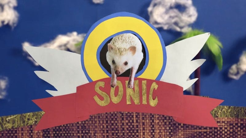 Illustration for article titled A real-life hedgehog takes on Sonic
