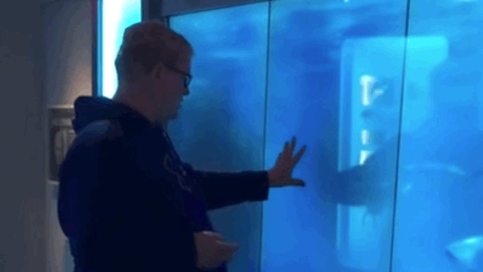 Esta broma con un tiburón que rompe la pared de su acuario va a provocar infartos a los visitantes de este museo
