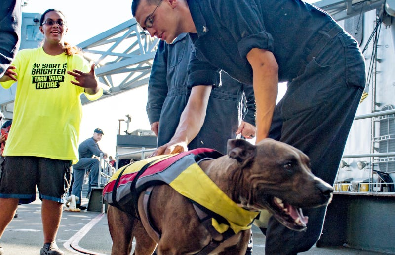 Tasha Fuiaba (L), Zeus the dog (Right)/Image via AP.