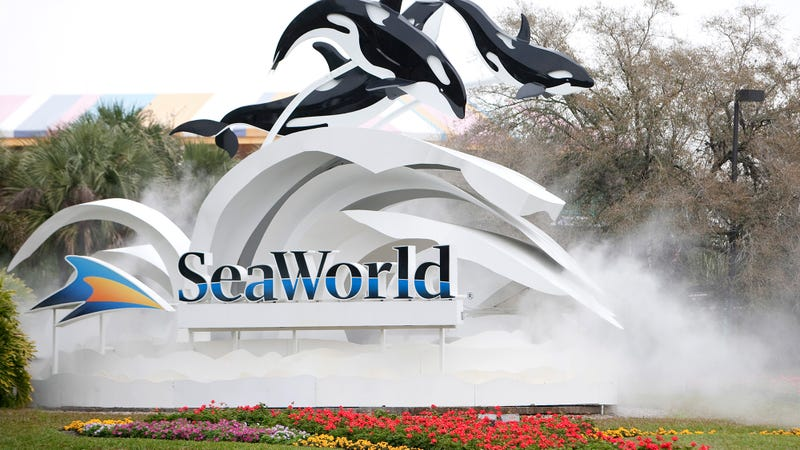 Illustration for article titled Fed Up: SeaWorld Just Went Off About How Everyone Wants SeaWorld To Get Rid Of Orcas But No One's Coming To Take The Orcas Off Their Hands