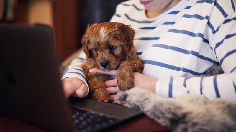 "Illustration for article titled Brave columnist: ""Dogs are parasites"""