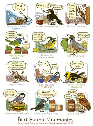 Illustration for article titled Cute Field Guide Helps You Remember Bird Calls with Beer, Cheeseburgers