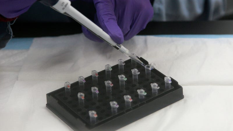 Illustration for article titled Georgia Police Are Using DNA to Identify the Mother of a Human Fetus