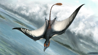 Illustration for article titled Pterodactyls Are Not Dinosaurs.  So What The Hell Are They?