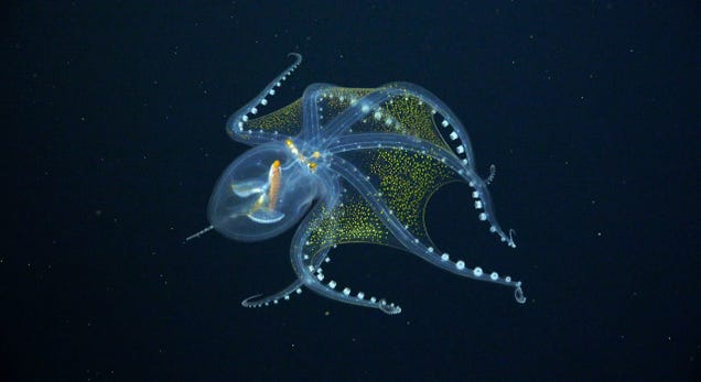 6 Surreal Views of Newly Discovered Deep Sea Creatures