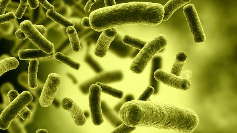 Cada persona emite una nube única de bacterias que puede usarse como huella dactilar