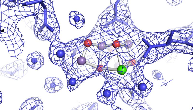 Photosystem II splitting water. The blue circles are water, purple is manganese, green is calcium, red is oxygen. The netting is electrons and the blue lines are proteins that serve as scaffolding.
