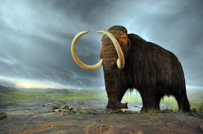 Illustration for article titled Complete Woolly Mammoth Skeleton Found In The North Sea