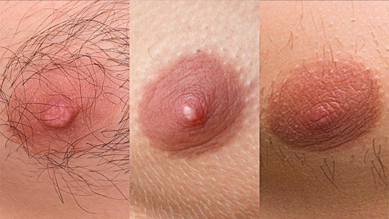 Illustration for article titled An Enemy In Hiding: Amongst These Innocent Male Nipples Lurks A Wicked Female Nipple!