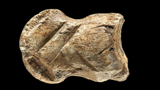 51,000-Year-Old Bone Carving Suggests Neanderthals Were True Artists