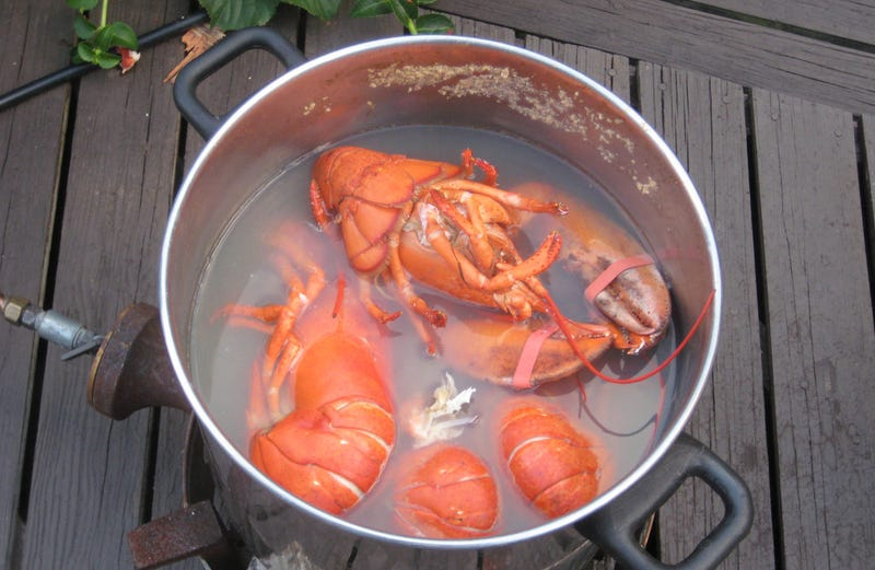 Illustration for article titled La costumbre de cocinar vivas a las langostas no tiene nada que ver con la gastronomía