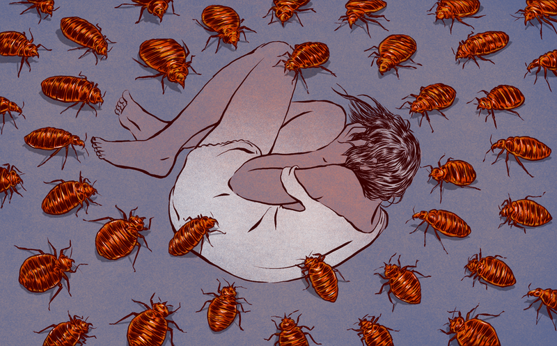 Illustration for article titled A History of Bedbugs Driving Us Insane