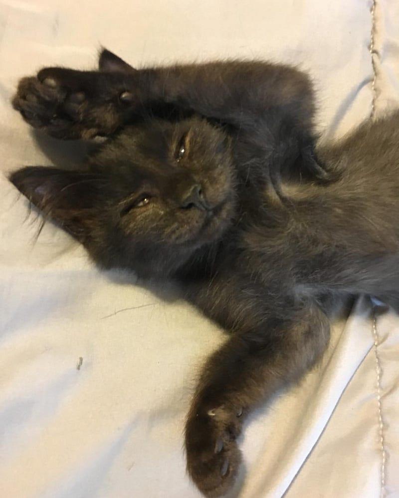 Illustration for article titled Monday morning kitten update