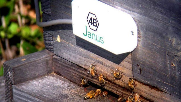 This Sensor Lets Beekeepers Catch Bees Before They Do Each Other Dirty