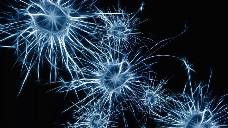 Psychedelic Drugs May Help the Brain Repair Itself, Study Finds