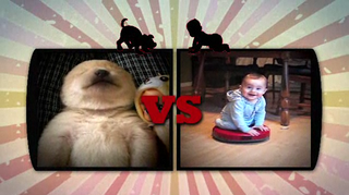 Illustration for article titled OMG, Puppies Vs. Babies Is A Real TV Show