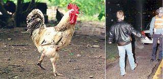 Illustration for article titled Tastes Like Chicken? Or Tastes Like Sleepy Drivers?