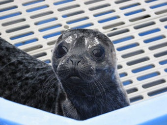Illustration for article titled Seal Isn't the Only Seal Who Sings