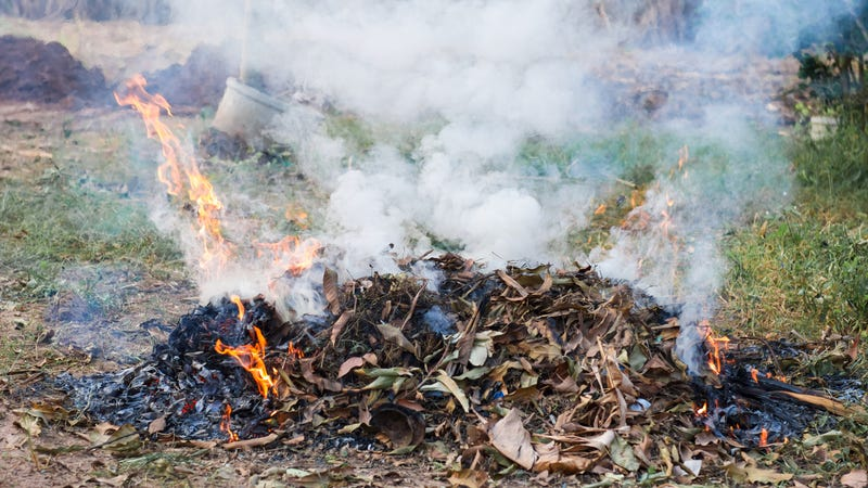 Illustration for article titled Florida man burns pile of weed in yard