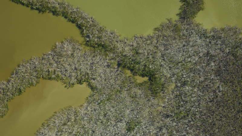 A swath of mangrove forest in Ten Thousand Islands captured by NASA during flyovers on December 1 2017 (three months after).