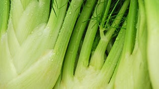 Illustration for article titled Save Fennel Stalks from the Garbage and Use Them Instead of Celery