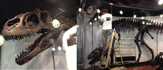 """Illustration for article titled Creation Museum To Display Dinosaur That """"Proves"""" Biblical Flood"""