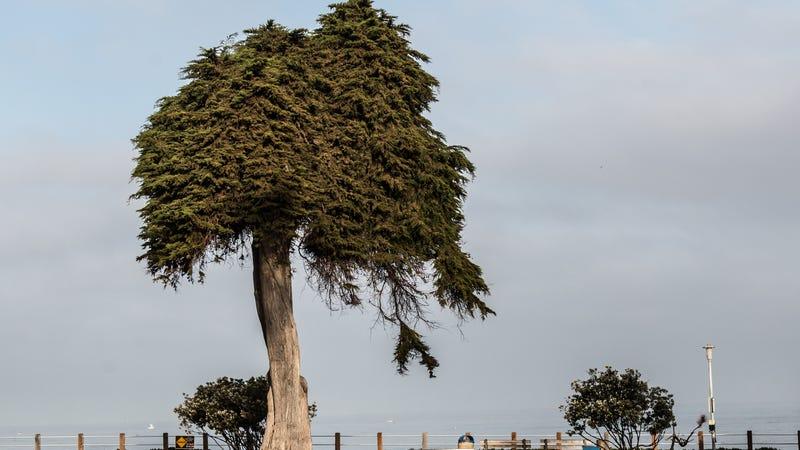 RIP, Lorax Tree.