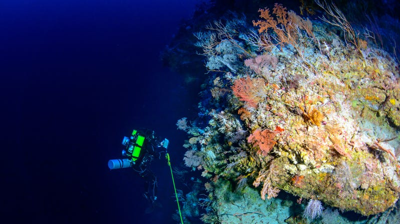 The descent into the reefs of Pohnpei, Micronesia.