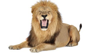 Illustration for article titled OS X Lion May Roar To Life On Wednesday July 20