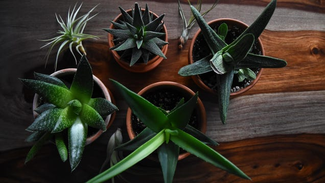 How to Safely Move Your Houseplants to Your New Place
