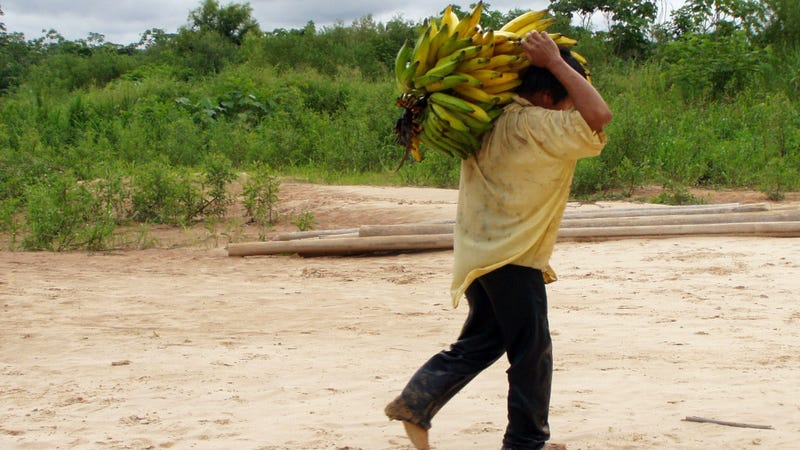 A Tsimané  man carrying bananas.
