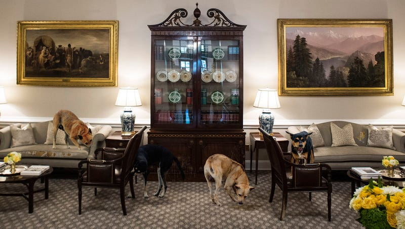 Illustration for article titled Trump Dismisses Concerns Over White House Chaos After Pack Of Feral Dogs Takes Over 4th West Wing Room