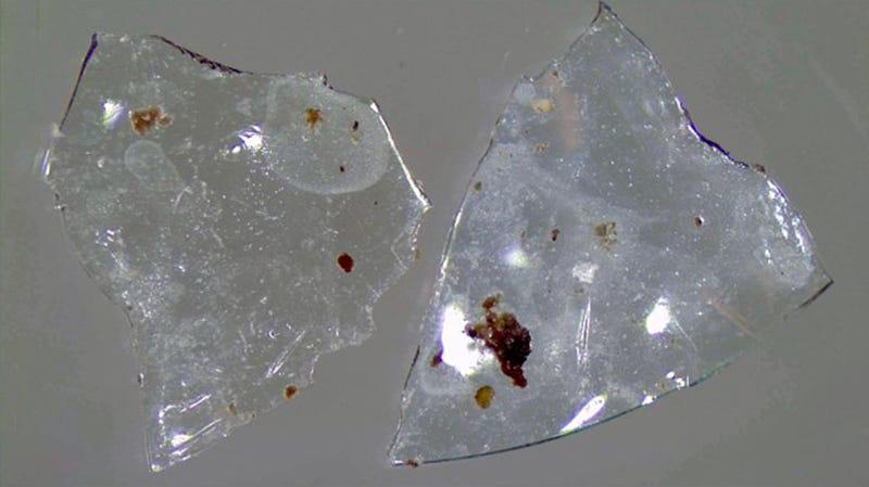 Fragmentos de lente de contacto recuperados del sistema de tratamiento de aguas.