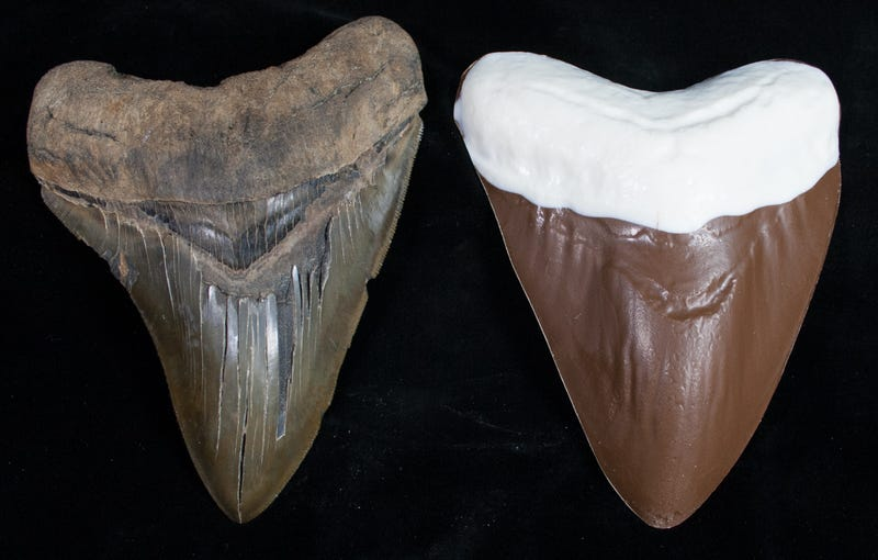 Illustration for article titled Check Out These Mind-Blowing Megalodon Teeth Made Out Of Chocolate