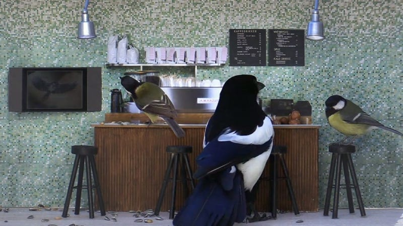 Illustration for article titled A Television Show About The World's First Cafe For Wild Birds