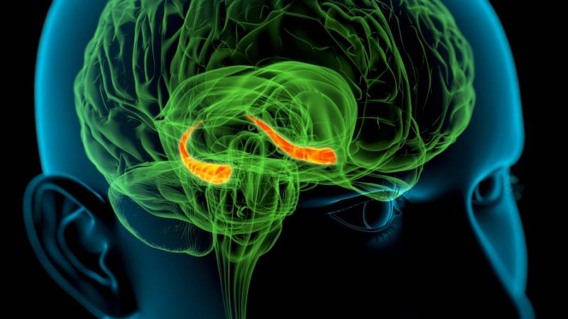 Illustration for article titled Localizan la señal cerebral que permite saber con precisión si una persona ha entendido una frase o no