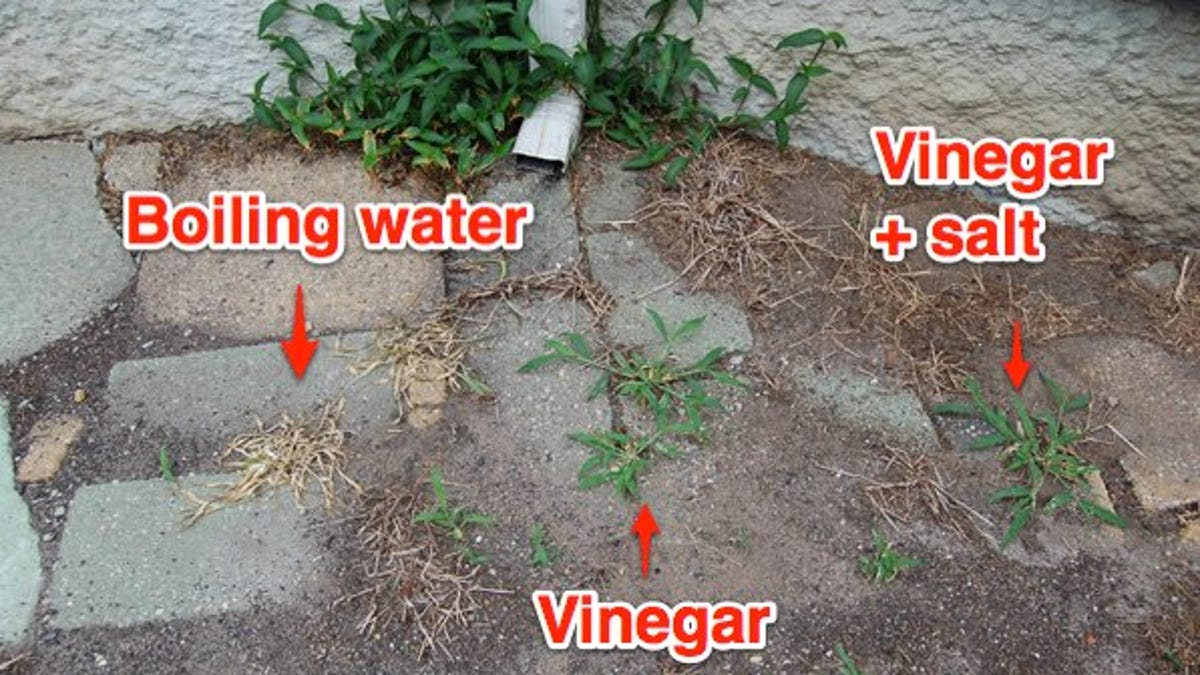 How to get rid of weeds in the summer cottage and in other places 71
